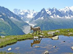 http://pixdaus.com/unnamed-animals-bouquetin-chamonix/items/view/62748/