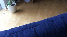 Budgie runs along the sofa! http://ift.tt/2rCmzRM