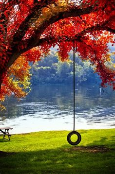 A swing over water