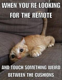 When you reach for remote but touch something weird instead pic.twitter.com/SEpYpvEjWN http://ibeebz.com