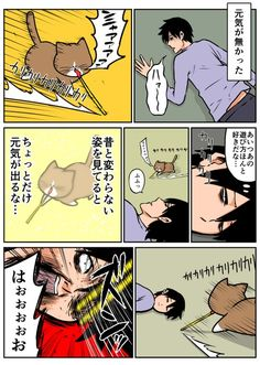 Twitter ©️鴻池 剛 Cat Comics, Faith In Humanity, Comic Strips, Funny Cats, Art Drawings, Comedy, Funny Pictures, Cute Animals, Shit Happens
