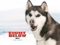 Watch Streaming HD Eight Below, starring Paul Walker, Jason Biggs, Bruce Greenwood, Moon Bloodgood. Brutal cold forces two Antarctic explorers to leave their team of sled dogs behind as they fend for their survival. #Adventure #Drama #Family http://play.theatrr.com/play.php?movie=0397313