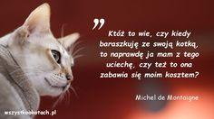 Cytaty o kotach – Michel de Montaigne