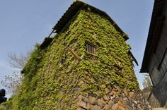 Ogijima Ivy House  男木島 蔦の家