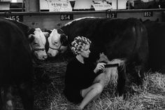 Beauty contest for cattle at the Iowa State Fair. Des Moines, 1965. (Dennis Stock)