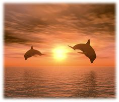 Illustration about Two dolphins floating at ocean (realistic red sunset). Illustration of marinelife, fish, nature - 2080844 Nature Water, Science Nature, 21 Day Meditation, Red Sunset, Beautiful Sunset, Beautiful Things, Marine Life, Sea Creatures, Dream Vacations