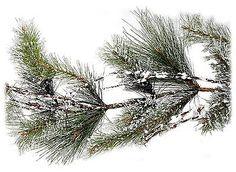 Artificial Sierra Snow Pine Garland w/Twigs Christmas Decor 6 feet NEW XG89678