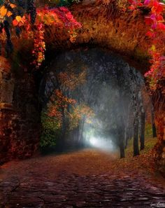 SEASONAL – AUTUMN – a scenic pathway surrounded by the brilliant colors of fall at the forest portal in moldova, photo via barbara. Beautiful World, Beautiful Places, Beautiful Pictures, Beautiful Forest, Beautiful Scenery, Amazing Places, Beautiful Landscapes, Mother Nature, Nature Photography
