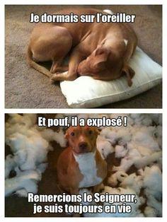 J'adooooooooore... ... Trop beau le chien... ...