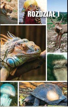W świecie przyrody komunikacja wykracza poza przekazywanie sobie informacji dźwiękowych pomiędzy osobnikami jednego gatunku. Środkami komunikacji mogą być odpowiednie kolory, określone ruchy (np. skomplikowany taniec), sygnały zapachowe, sygnały świetlne lub drgania o ustalonym rytmie. Przekazywane informacje służą nadawcy do osiągnięcia zamierzonego celu.