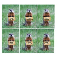 Funny groundhog greeting cards  Happy birthday  by belvidesigns