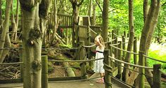 Forest Fun - Adventures in the Forest at Groombridge Place, a great day out for kids near Tunbridge Wells. Tunbridge Wells, Playground Ideas, Play Areas, Days Out, Summer Girls, Summer 2015, Genealogy, Enchanted, Children