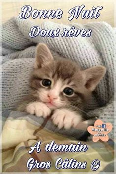 Good Night Gif, Good Night Sweet Dreams, Anti Stress, Animal Quotes, Cute Cats, Kittens, Animals, Facebook, Conversation