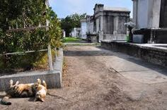 Image result for cats in cemeteries