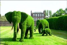 From the astounding Green Animals Topiary Garden, Portsmouth, RI, USA