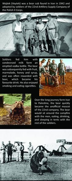 Funny pictures about The Amazing Story Of Voytek The Soldier Bear. Oh, and cool pics about The Amazing Story Of Voytek The Soldier Bear. Also, The Amazing Story Of Voytek The Soldier Bear photos. Wojtek Bear, Poland Ww2, Bear Cubs, Bears, Dump A Day, As Time Goes By, Military History, Military Humor, Cute Creatures