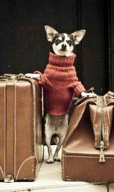 Travelin' Chi!
