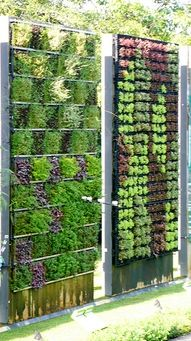 Not sure how this was done, but that is a wall of lettuce, and another wall of what looks to me like herbs or other veggies. What a beautiful statement piece for your garden, and useful.