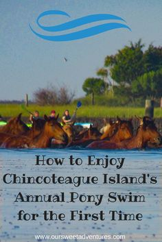 425 Best Chincoteague Island Va images in 2019