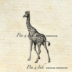 Giraffe No.2 Digital Vintage Graphic Antique by PenandInkVintage