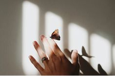 brown and gray moth on person's index finger in the light bay Hand With Ring, Free Tone, Minimal Beauty, House Blessing, Free High Resolution Photos, Image Gifts, Ring Pictures, Spiritual Development, Personal Development