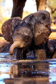 Mud Bath Elephant Love ❤️