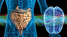 The best probiotic for brain and gut health -- Health & Wellness -- Sott.net