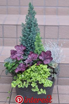 Container Plants For Winter Annual Plants Container plants for winter _ k Container Gardening Vegetables, Potted Plants Outdoor, Heuchera, Plants, Container Flowers, Winter Planter, Annual Plants, Flower Pots Outdoor, Winter Container Gardening