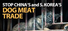 Stop China and S Korea Dog Meat