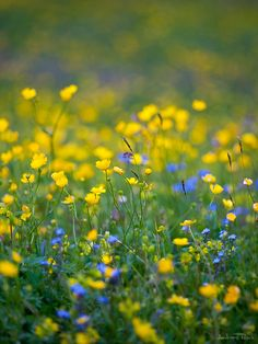 """loriedarlin: """" Complementary by AndreasResch """" British Wild Flowers, Simple Pleasures, Bokeh, Pure Products, Garden Sheds, Plants, Spring Flowers, Romance, Seasons"""