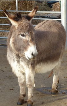 Small but perfectly formed - little Matthew @ Island Farm #Donkey Sanctuary