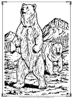 Realistic Bear Coloring Pages For Adults