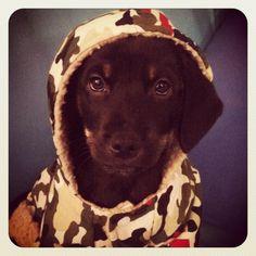 Puppy soldier.