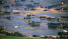 築地松と水田