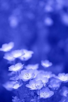 whats that stand for? just kidding! Blue Flowers, Wild Flowers, Beautiful Flowers, Beautiful Pictures, Blue Dream, Love Blue, Himmelblau, Blue Life, Blue Aesthetic