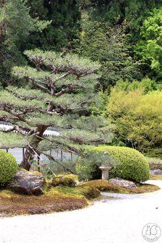 Oravanpesä: JAPANI 2019 osa 35: Sayonara. Saiho-ji l. Kokedera, Kyoto