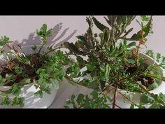 Herbalism, Health, Plants, Herbal Medicine, Health Care, Plant, Planets, Salud