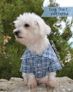 With these premium patterns you can sew a cool shirt for your dog or cat. Hawaiian style shirt, squares, for a wedding, etc ...make a dog shirt!!