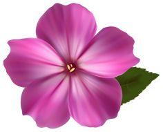 Flowers – Kristina R.