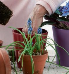 Gardening and Arthritis. The fact that you or I have arthritis is not the end of gardening.   In fact it is great for our bodies to keep them limbered up just to continue gardening. It is really important to find the methods and the tools to do this to make it as pleasant and pain free as possible!