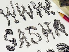 hand sketched mushroom illustration type