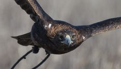 Mike's Falconry Supplies: High-Quality Falconry Equipment Online