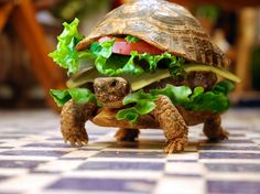 Funny Turtle Burger Wallpaper in 1920x1440
