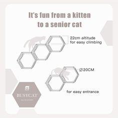 Crazy Cat Lady, Crazy Cats, Cat Tree Plans, Cat Wall Shelves, Cat Steps, Cat Body, Cat Supplies, Cat Furniture, Cat Life
