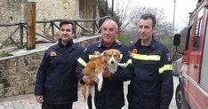 Πυροσβέστες έσωσαν σκυλί από ποτάμι