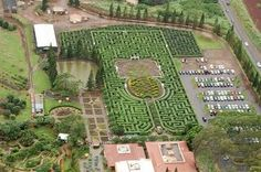 ...Oahu, Hawaii. The world's longest maze is at the Dole Plantation. Comprised of 11,400 tropical native plants and covering 3.11 miles.