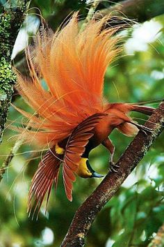 Beautiful, outrageous bird showing all it's stuff.