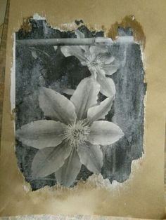 Emulsion print onto brown paper Alternative Art, Arts Ed, Natural Forms, Brown Paper, Student Work, 3d Design, Mixed Media Art, Cnc, Collage