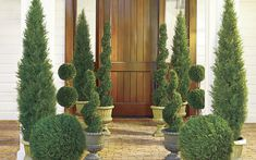Use these 6 tips to decide which topiary is right for you based on size, shape and greenery. Also get cleaning and storing topiary tips. Porch Topiary, Front Porch Planters, Topiaries, Juniper Tree, Small Balcony Garden, Garden Pots, Vegetable Garden, Landscape Design, Vertical Gardens