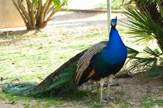 Portugal, Park, Photography, Animals, Photograph, Animales, Animaux, Fotografie, Parks